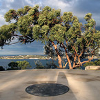 Georges Head Lookout - The trees below the lookout platform at Georges Head, Suakin Drive. Photo by Chris Gleisner.